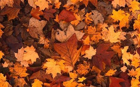 Herfst kleding kleuren