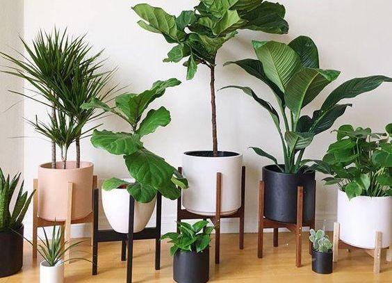 Pots and plants